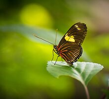 Perched on a  Leaf by OzPhoto