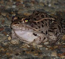 Slimey frog/ snake. by PhotosByNita