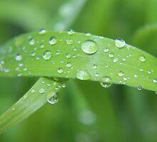 Grass & Rain Drops Untouched by AnnDixon
