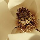 Up Close and Personal With A Magnolia Blossom by Sanguine