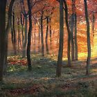 Autumn Forest Dawn by Photokes