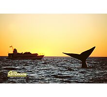 Sunset Whale watching in Peninsula Valdes Photographic Print