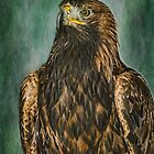 Golden Eagle by M.S. Photography & Art