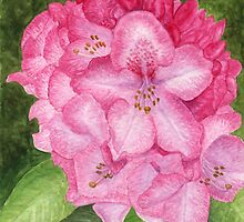 Pink Azalea - watercolor painting by Melissa Rogers