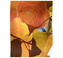 Autumn Hearts Poster
