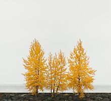 Trees in autumn color by 3523studio