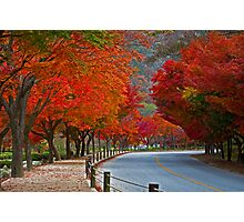 A Red Road Photographic Print