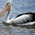 Big and Bold Mr Pelican by Lozzar Landscape