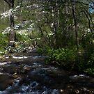 Springtime Pine Creek North Carolina by KSKphotography