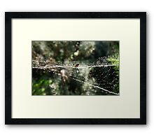 Silver orb weaving spider Framed Print