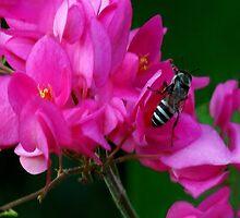 HEAR NO BUZZ-JUST BEE-CAUSE DECORATIVE THROW PILLOW by ✿✿ Bonita ✿✿ ђєℓℓσ