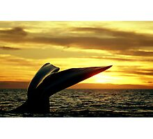 Sunset Whale tail in Peninsula Valdes Photographic Print