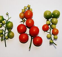 Tomatoes by Anita Kovacevic