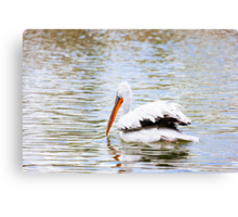 Pelican In The Water Canvas Print