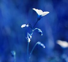 BLUE FILTER by PIMPINELLA