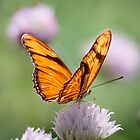 Julia Butterfly on Clover by Robert Kelch, M.D.