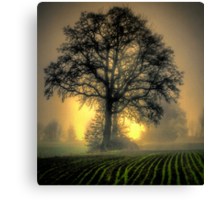 In The Early Light Canvas Print