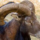530 Ram by pcfyi