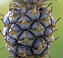 Pineapple Patterns by Terri~Lynn Bealle