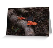Rainforest Detail Greeting Card