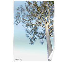 Gumtree Dreaming Poster