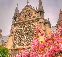 Notre Dame with cherry blossoms by Michael Matthews