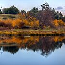 Lake Meadowbank in Autumn by Christine Smith