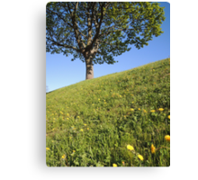 Happy Inclination Canvas Print