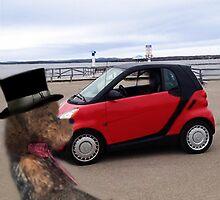 SMART BEARS DRIVE SMART CARS by ╰⊰✿ℒᵒᶹᵉ Bonita✿⊱╮ Lalonde✿⊱╮
