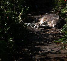 Sleeping kitty by turniptowers