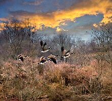 Sunset Geese Landscape by Christina Rollo