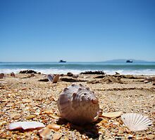 Waiheke Island Seashells by davidandmandy