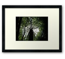 Timeless Forests Of New Zealand Framed Print