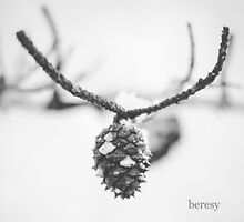 Black and White Winter Pine Cone by beresy