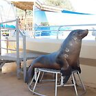 Dolphin Marine Magic - Seal Feeding by Joe Hupp