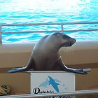 Dolphin Marine Magic - Smiling Seal by Joe Hupp