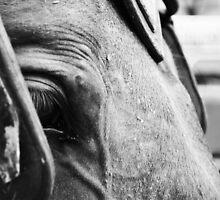 NYC Horse Blk & Wht by anjybobanjy
