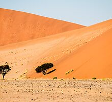 Namibian Desert by Marylou Badeaux