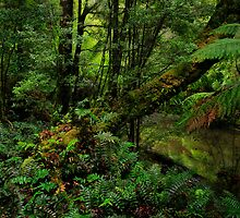 Rainforest in Tasmania by Angelika  Vogel