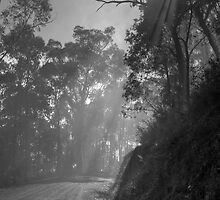 Jesus Light on Mountain Track by Colin  Ewington