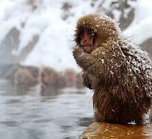 Snow monkey by TTAN