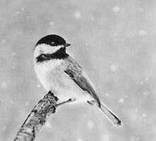 Winter Bird Chickadee by artddicted