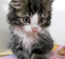 Itty Bitty Cutie Kitty by Ladymoose