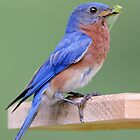 Mr. Mixed Up Bluebird by Bonnie T.  Barry