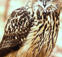 Great Horned Owl by Peace N Freedom by Design