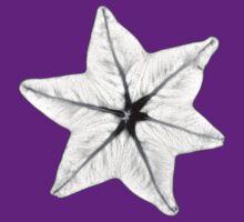 Star Anise MRI by gordeaux