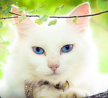 Blue Eyed Cat by Mirella Mase