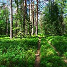 Forest Trail by Martins Blumbergs