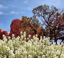 Canyon Lands Spring by debidabble