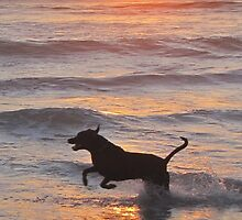 Dog jumping in sunlit waves - phone case by Lee Jones